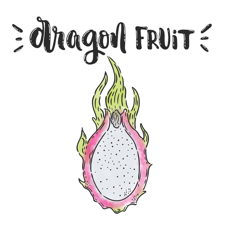 A Vector hand drawn illustration. Dragon lettering, fruit. The idea for poster, posctcard.