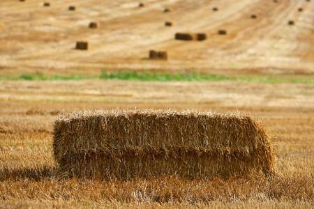 Haystack in the field