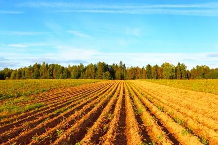 Farmer Field Stockfoto