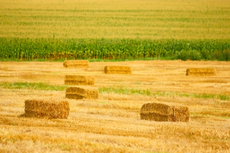Harvesting in the field photo