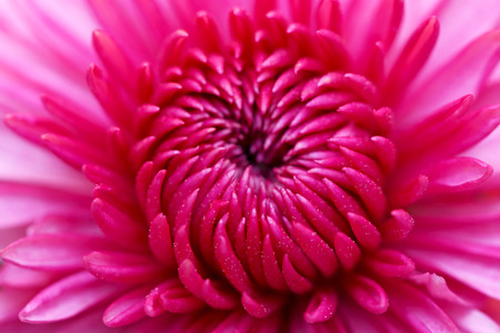 Red  flower close up photo
