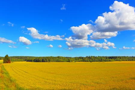 Farmer field of wheat background Stockfoto