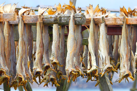 Cod stockfish.Industrial fishing in Norway photo