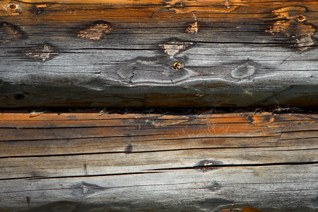 Wall of log  background.