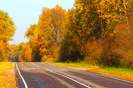 country road: Open road in the autumn wood