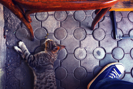 gym shoes: Street cafe. Cat, gym shoes, jeans and heat. Stock Photo