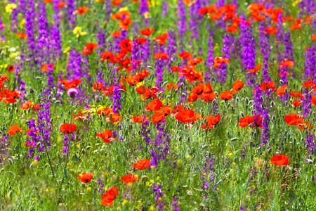 Meadow flowers. Background of a spring field.