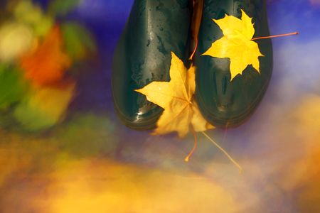 Autumn background.Leaf fall in a pool. Gumboots. Stock Photo