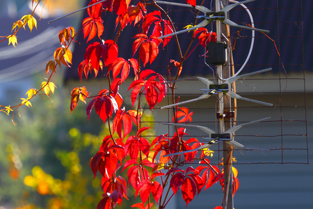 wireless communication: Internet antenna. Wireless communication in the country. TV.WI-FI. Autumn background.