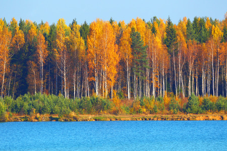 Autumn landscape. Background of paints of fall of the wood.