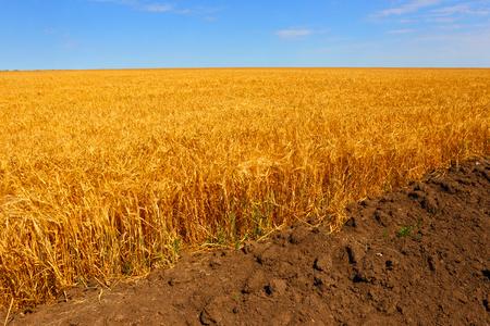 furrow: Farmers wheat field.A plowed furrow. Stock Photo