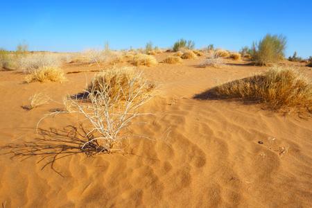 The sandy desert. Natural landscape.Central Asia.Uzbekistan. Stok Fotoğraf