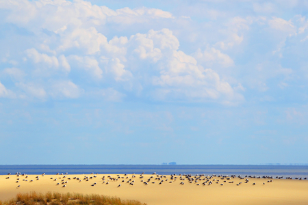 The Curonian spit.Baltic sea.
