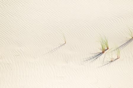 Background of sand. Desert. Dune. Stock Photo