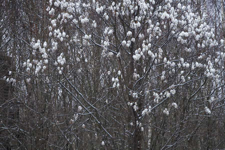 The first snow on the branches of trees Standard-Bild