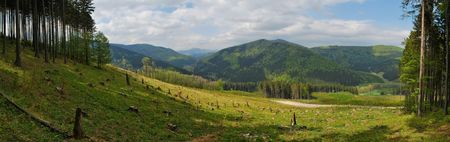 involving: Stitched panorama of forest managed under systems involving coupes