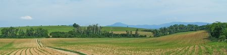 Panorama of landscape with corn field Stock Photo - 7245750