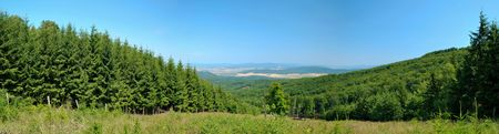 Stitched panorama of forest tree nursery with good view Stock Photo - 7327817
