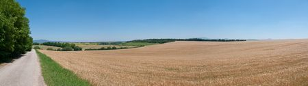 Panoramic view at cultivated land with barley field photo