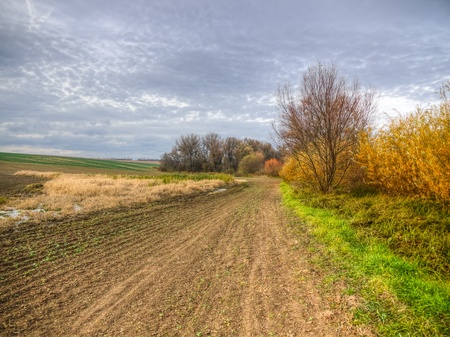 Forest fragments in farmland with fields, meadows and swamps during the late autumn photo