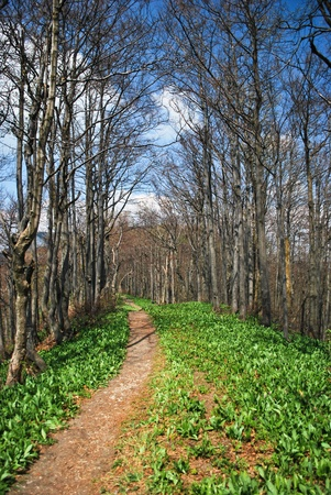 Narrow lane among the waking forest vegetation in early spring photo