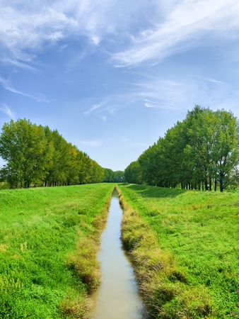 long line of water course with high poplars growing on the banks Stock Photo - 10453825