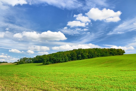 field and forest with a perfect blue sky