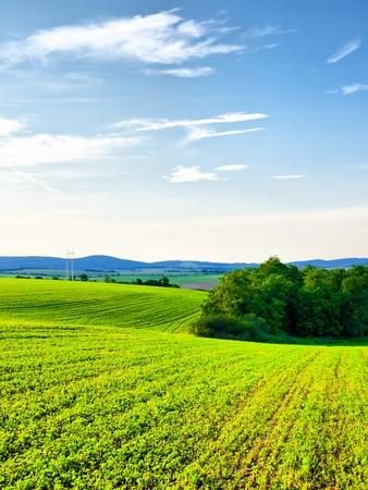 Frische grüne Wiesen und schönen blauen Himmel sind typisch für den Frühling in der Slowakischen Landschaft