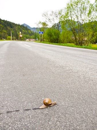 Snail with shell passes across the country road photo