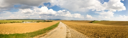 Panorama of agricultural landscape with fields on the horizon