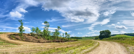Panoramic view of the devastated acacia forest located on the hillside