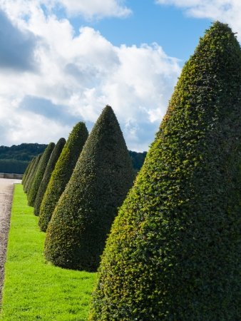 trimmed: Number of topiary trees in beautiful landscape of ornamental garden