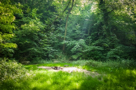 Beautiful forest clearing picnic place in the rays of the sun Stock Photo
