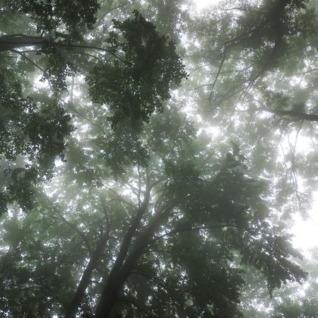 Forest landscape with treetops in the fog photo