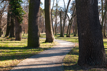 Meandering trail in autumn park with huge tree alley photo