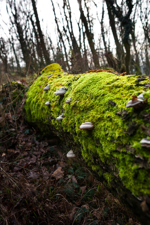 Tree fallen on the ground and covered with lush green moss photo
