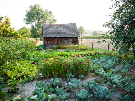 Various plants and flowers in the small family vegetable garden