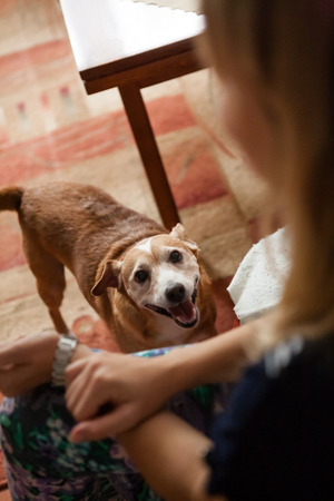 from below: Small brown dog looking and smiling from below to a blonde woman Stock Photo