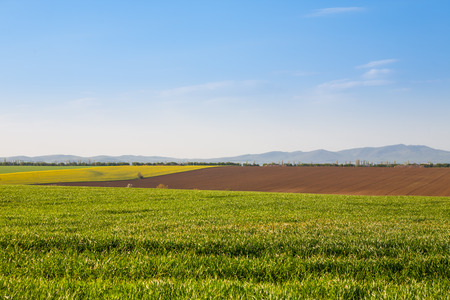 agricultural crops: Fields with growing agricultural crops with hills in the background and beautiful blue sky
