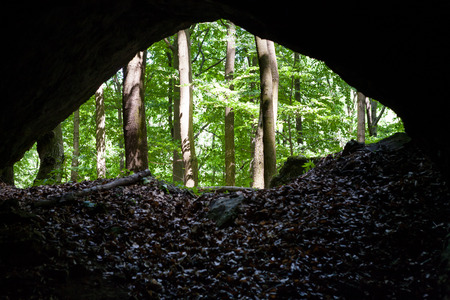 View of forest from inside the cave