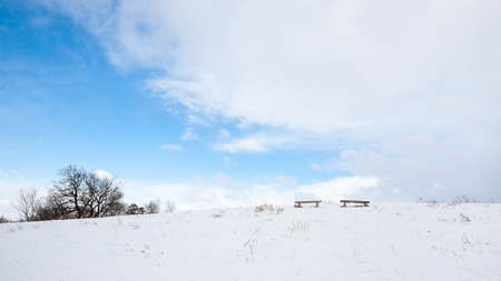 leafless: Winter scene with leafless trees and benches on the hill