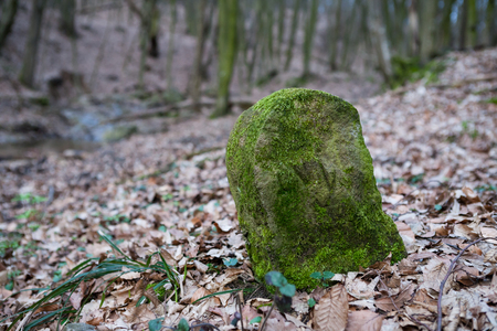 overgrown: An old boundary stone overgrown with moss in deep forest