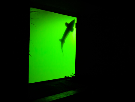 Green aquarium in the dark with shadow of fish Stock Photo