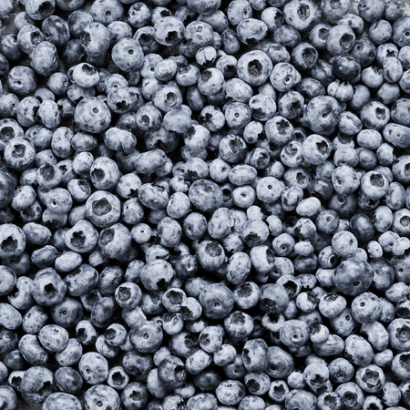 Lot of freshly picked juicy blue berries as background
