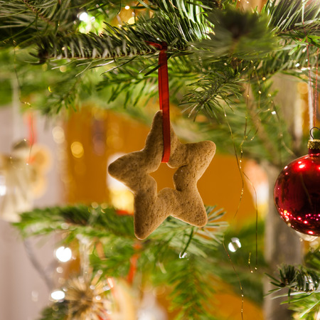 Crunchy gingerbread cookie on shiny christmas tree background