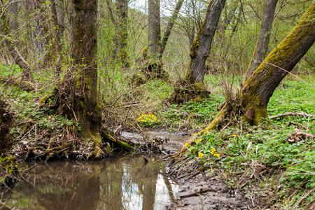 Schöner kleiner Bach, umgeben von grünen Pflanzen und Bäumen Lizenzfreie Bilder