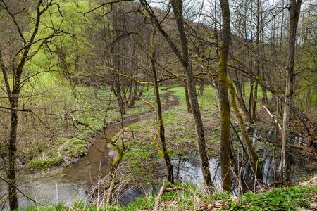 Kleiner Bach läuft und schlängelt sich durch den Frühlingswald