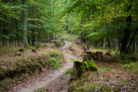 Tiefer Waldweg gesäumt von schönen Herbstbäumen