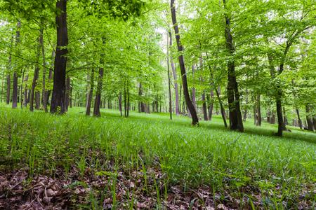 Grüner Karpatenwaldboden landschaftlich im Frühjahr Lizenzfreie Bilder
