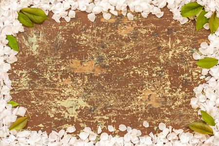 Cherry blossom petals and green leaves in frame on wooden background with place for text Фото со стока